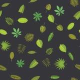 Modelo inconsútil con las hojas tropicales verdes Fondo floral, ejemplo del vector en negro Imágenes de archivo libres de regalías