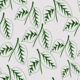 Modelo inconsútil con las plantas de las hojas Fotografía de archivo libre de regalías