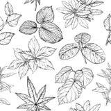 Modelo inconsútil con las ramas y las hojas, elementos exhaustos del diseño de la mano imagen de archivo libre de regalías