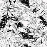 Modelo inconsútil con las ramas y las hojas, matorrales de la selva Rebecca 36 libre illustration