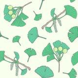 Modelo inconsútil con las ramas y las hojas, flores, bayas del biloba del ginkgo fondo médico, botánico de la planta Vector Imágenes de archivo libres de regalías