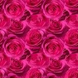 Modelo inconsútil con las rosas fotos de archivo libres de regalías