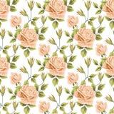 Modelo inconsútil con las rosas Foto de archivo libre de regalías