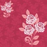 Modelo inconsútil con las rosas grandes en sombras del perno Imágenes de archivo libres de regalías