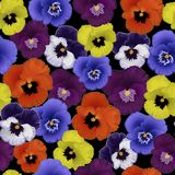 Modelo inconsútil con las violetas de las flores fotos de archivo