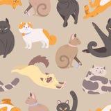 Modelo inconsútil con los gatos de diversas razas Contexto con los animales de animal doméstico criados en línea pura en diversas libre illustration