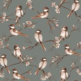 Modelo inconsútil con los pájaros de la acuarela que sientan en ramas con las flores imagen de archivo libre de regalías
