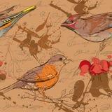 Modelo inconsútil con los pájaros, las bayas y las manchas 3 Imágenes de archivo libres de regalías