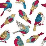 Modelo inconsútil con los pájaros multicolores Fotografía de archivo