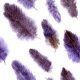 Modelo inconsútil con los penachos violetas Foto de archivo libre de regalías