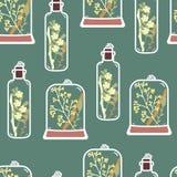 Modelo inconsútil con los terrarios florales dibujados mano Imagen de archivo libre de regalías