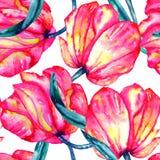 Modelo inconsútil con los tulipanes del carmesí y del escarlata de la acuarela stock de ilustración
