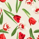 Modelo inconsútil con los tulipanes rojos y blancos Flores, brotes y hojas realistas hermosos Imagenes de archivo
