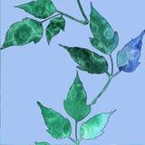 Modelo incons?til con verde de la acuarela y hojas de los azules stock de ilustración
