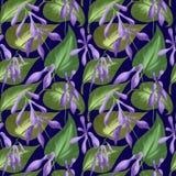 Modelo inconsútil de hojas y de flores de hostas en un fondo azul marino Ejemplo de Digitaces stock de ilustración