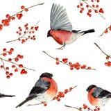 Modelo inconsútil de la acuarela con el piñonero y las bayas rojas Ornamento pintado a mano con los pájaros y las bayas del invie libre illustration