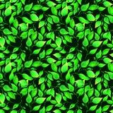 Modelo inconsútil de la acuarela con las hojas verdes en fondo verde oscuro Ilustraciones sin fin a mano Papel pintado floral ilustración del vector