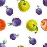 Modelo inconsútil de la acuarela con las manzanas de los ciruelos, rojas y verdes Imágenes de archivo libres de regalías