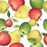 Modelo inconsútil de la acuarela con las manzanas y las peras frescas Foto de archivo libre de regalías