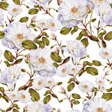 Modelo inconsútil de la acuarela del arbusto de rosas blancas Foto de archivo libre de regalías