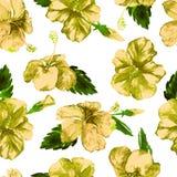 Modelo inconsútil de la acuarela Ejemplo pintado a mano de hojas y de flores tropicales Adorno tropical del verano con el modelo  Imagenes de archivo