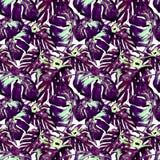 Modelo inconsútil de la acuarela Ejemplo pintado a mano de hojas y de flores tropicales Adorno tropical del verano con Liana Patt Fotografía de archivo