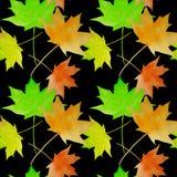 Modelo inconsútil de la acuarela de las hojas de arce Fondo colorido del otoño Imagenes de archivo