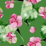 Modelo inconsútil de la acuarela rosada de la hortensia Imagenes de archivo
