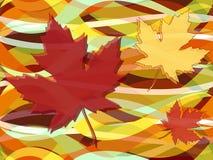 Modelo inconsútil de la caída de las hojas de arce Fotografía de archivo libre de regalías