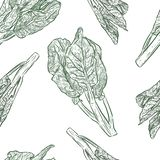 Modelo inconsútil de la col rizada de Chenese o del bróculi chino stock de ilustración