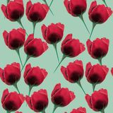 Modelo inconsútil de la flor tulpan hermosa y colorida Foto de archivo
