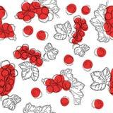 Modelo inconsútil de la fruta de la pasa roja Fondo blanco con las bayas de la pasa roja Mejor para el diseño de breakfas del jug fotografía de archivo libre de regalías