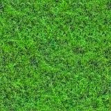 Modelo inconsútil de la hierba (1 de 2). Imagen de archivo