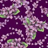 Modelo inconsútil de la lila violeta de la acuarela Imagenes de archivo