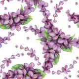 Modelo inconsútil de la lila violeta de la acuarela Fotos de archivo
