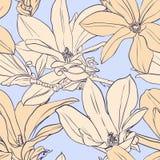 Modelo inconsútil de la magnolia del vintage Imagen de archivo libre de regalías