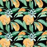 Modelo inconsútil de la mandarina Corte, flores y hojas anaranjados Ejemplo de la acuarela aislado en fondo negro ilustración del vector