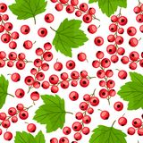 Modelo inconsútil de la naturaleza con las pasas rojas Imagen de archivo libre de regalías