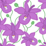 Modelo inconsútil de la orquídea Fotos de archivo libres de regalías