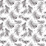 Modelo inconsútil de la pluma del pavo real stock de ilustración