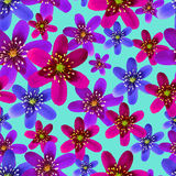 Modelo inconsútil de la primavera de la flor con hepatica Imagenes de archivo