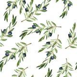 Modelo inconsútil de la rama de olivo Ejemplo dibujado mano de la acuarela libre illustration