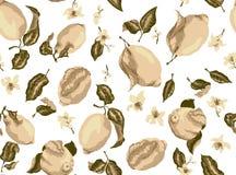 Modelo inconsútil de la sepia con las frutas del limón y flo floreciente de la fruta cítrica ilustración del vector