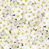 Modelo inconsútil de las flores Imágenes de archivo libres de regalías