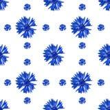 Modelo inconsútil de las flores del aciano en el fondo blanco imagenes de archivo