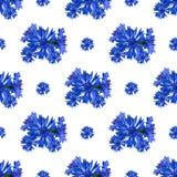 Modelo inconsútil de las flores del aciano en el fondo blanco foto de archivo libre de regalías
