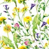 Modelo inconsútil de las flores salvajes de la acuarela del prado Imágenes de archivo libres de regalías