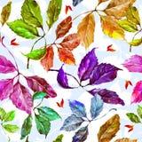Modelo inconsútil de las hojas coloridas de las uvas de la acuarela Foto de archivo libre de regalías