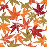 Modelo inconsútil de las hojas de arce del otoño Fotografía de archivo libre de regalías