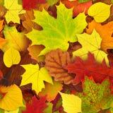 Modelo inconsútil de las hojas de otoño Fotos de archivo